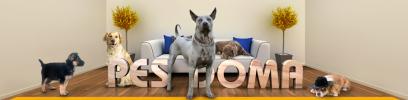 Chovateľské potreby a krmivá pre psov
